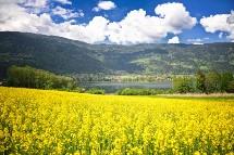 Großansicht Natur am Ossiacher See