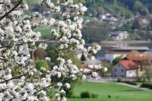 SeeRosen-Frühlingszauber