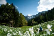 Großansicht Urlaub im Frühling in Kärnten